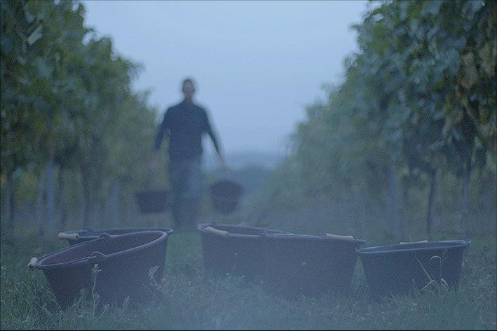 Maison D'Aincourt - Au cœur des vignes
